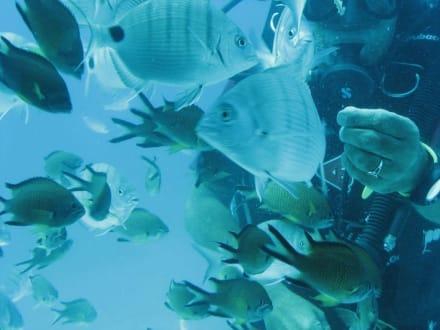 SubCat unter Wasser - SubCat Tour