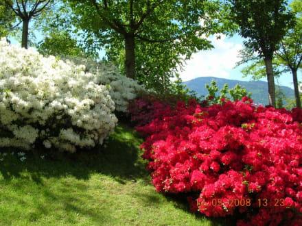 Üppige Blütenpracht - Die Gärten von Schloss Trauttmansdorff