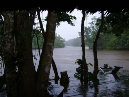 Regen im Dschungel - Orinoco Delta