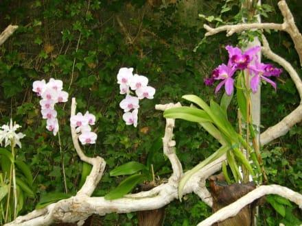 Orchideen im Loro Parque - Loro Parque