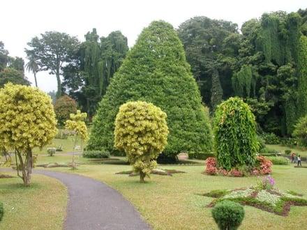 Botanischer Garten in Kandy - Botanischer Garten Peradeniya