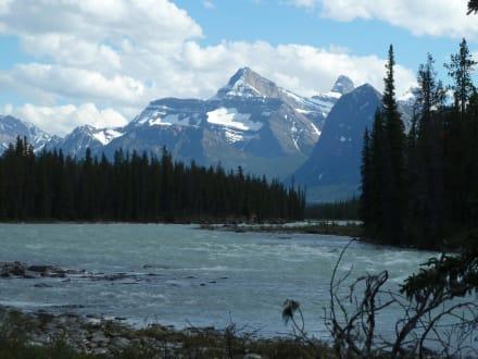 Athabasca River - Athabasca Falls