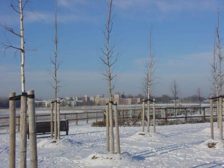 junge Bäume - Landschaftspark Rudow-Altglienicke