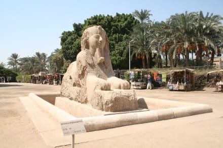 Memphis, Sphinx von Memphis - Freilichtmuseum Memphis