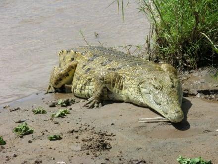 Nichts wie weg - Tsavo Ost Nationalpark