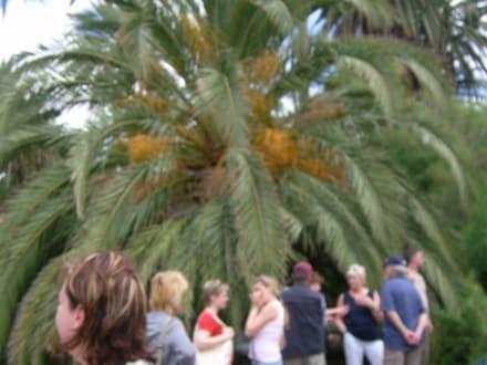 Palme als Restaurant - private Touren auf Fuerteventura