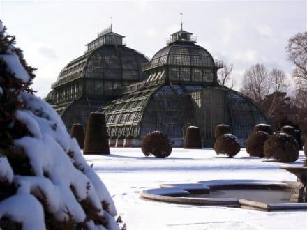 Schloss Schönbrunn - Palmenhaus - Tiergarten Schönbrunn