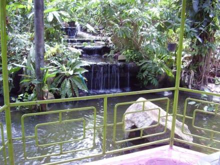 Auf der Schmetterlingsfarm - Phuket Butterfly Garden & Insect World