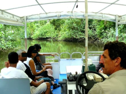 Fahrt auf dem Daintree River - Daintree Discovery