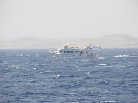 Unruhige See, auf der Rückfahrt. - Schnorcheln Dolphinhouse Marsa Alam