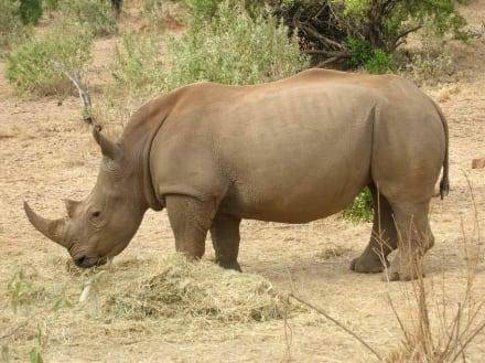 Rhino - Masai Mara Safari