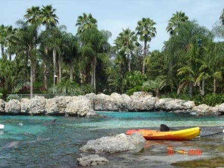 Discovery Cove - wie im Paradies - Sea World