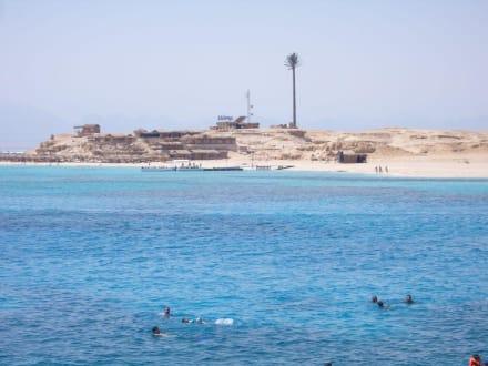 Giftun Insel - Tauchsafari King Snefro Spiri Hurghada