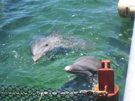 Besuch der Delfine - Delfinarium Varadero