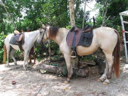 Die Pferde - Gabi Ranch
