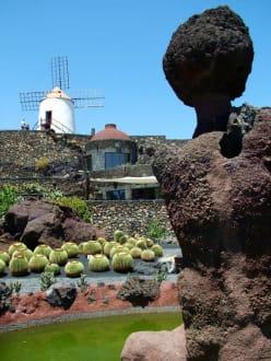 Kaktusgarten 3 - Jardin de Cactus / Kaktusgarten Guatiza