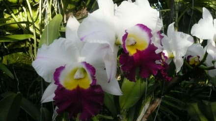 Naturreservat/Zoo - Phuket Orchid Farm