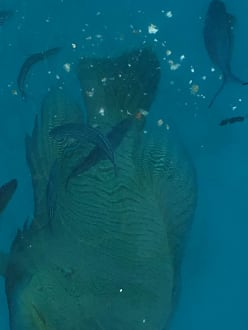 Blue Water Dive Resort Hurghada Hotel