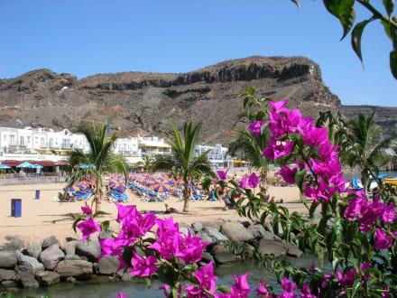 Strand von der Hafenseite aus - Strand Puerto de Mogán