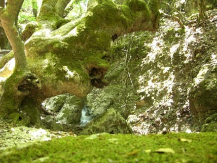Traumhaft - Peta Loudhes / Tal der Schmetterlinge