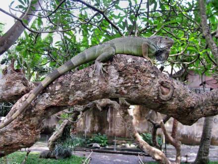 Chamälon - Reptilien- und Vogelpark
