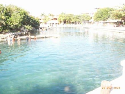 Cenote Ik-Kil - Cenote Ik-Kil