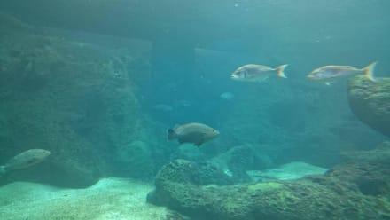 Aquarium - CretAquarium