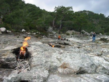Cimera - Ewige Feuer von Chimaera