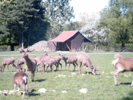 Mischgehege bei der Fütterung - Wildpark Leipzig
