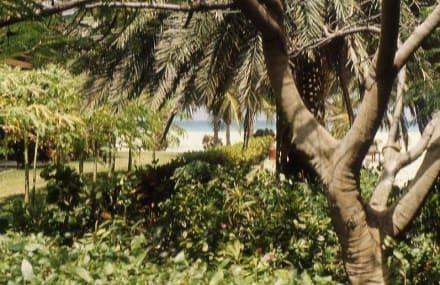 Gartenanlage des Manchebo Beach - Garten des Manchebo Beach