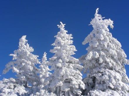Winterwald - Skigebiet Hochkar