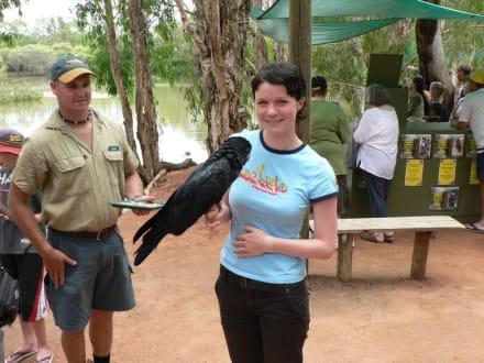 Raben-Kakadu ganz nah - Billabong Sanctuary