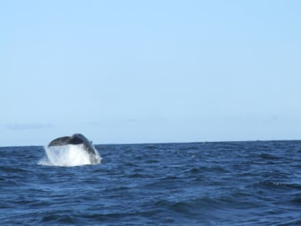 Animals (other)  - Whale Watching Tofino