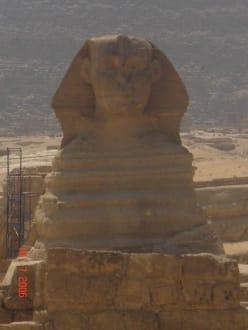 Die Sphinx - Sphinx von Gizeh
