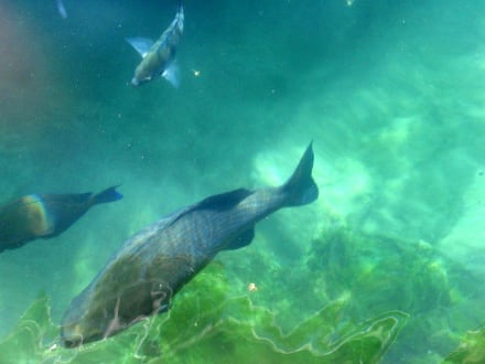 Die Fische - Xel-Ha Nationalpark