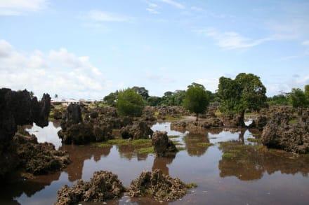 Korallengartsen bei einsetzener Flut - Korallengarten
