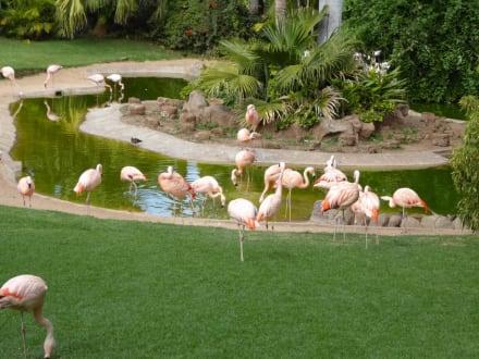 Flamingos - Loro Parque
