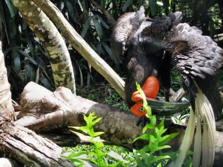 Exotische Vögel 2 - Reptilien- und Vogelpark
