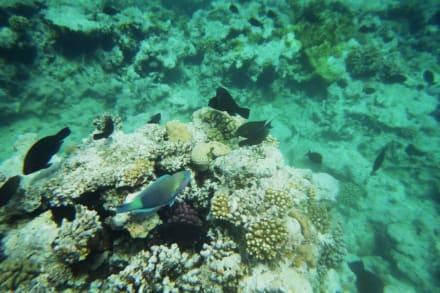 das Riff am Grand Makadi - Schnorcheln Makadi Bay