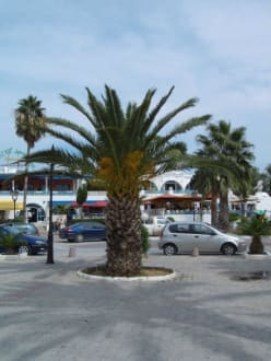 Palme - Medina