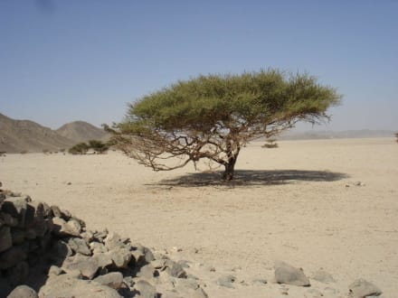 Wadi - Wadi Lahamy