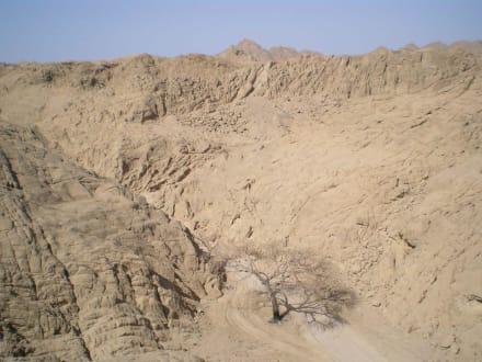 Wüste - Beduinen