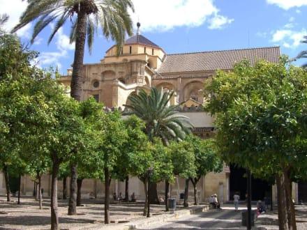 Mit Orangenbäumen bepflanzter Innenhof - Mezquita-Catedral