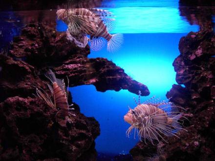 Aquarium - Loro Parque