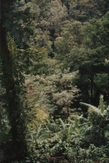 Parc National auf Basse Terre - Nationalpark Guadeloupe
