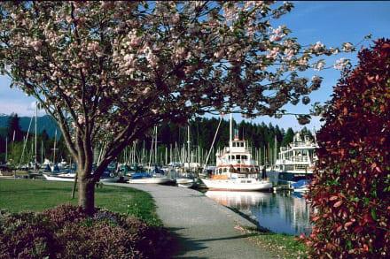 Baumblüte - Hafen Vancouver