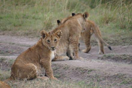 Was guckst du?! - Masai Mara Safari