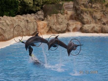 Die Delphin Show - Loro Parque