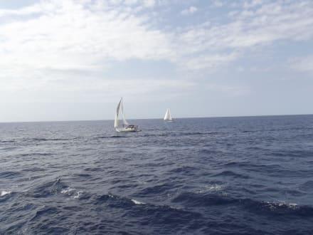 Herrlich - Submarine Vision Fahrt Paguera