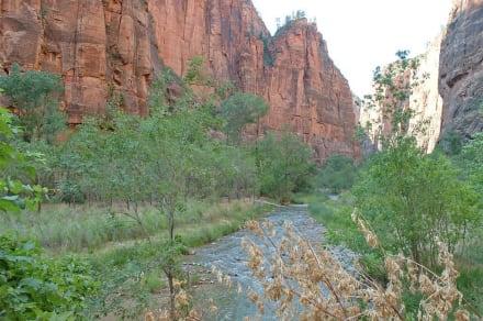 Zion NP - Zion Nationalpark